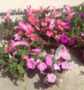 Steeplechase-Apartment-Homes-Cockeysville-MD-Spring-Is-In-Bloom-Free-Resident-Appreciation-Event-May 2014