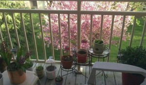Steeplechase-Spring Cleaning-2014-Balcony Patio-Contest-4