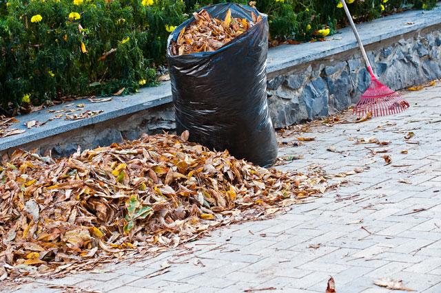 Leaf_raking_fall