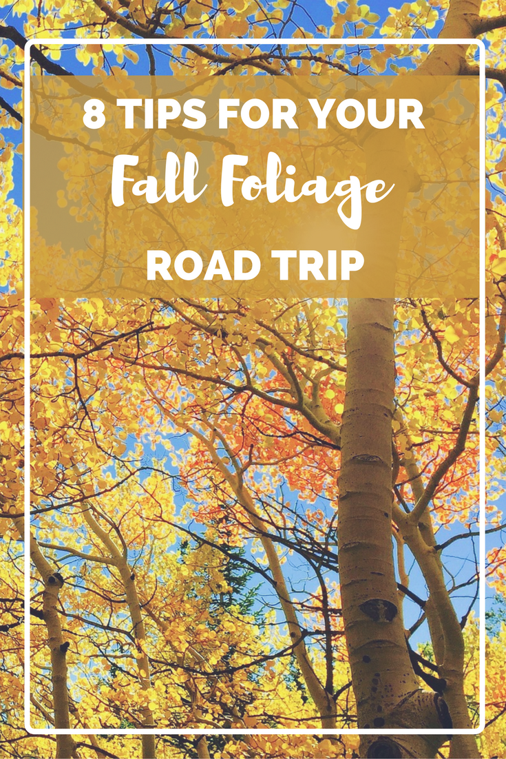8 tips for your fall foliage road trip