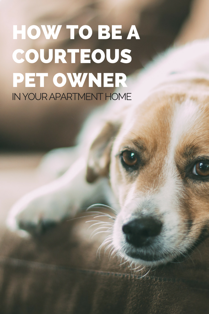 how to be a courteous pet owner in your apartment
