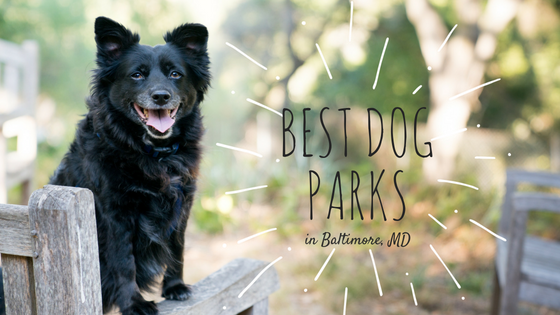 Best Dog Parks in Baltimore, MD
