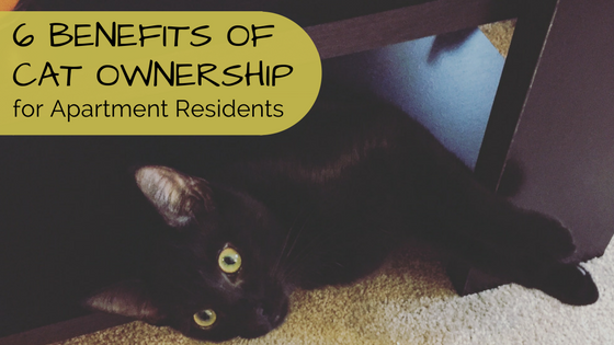 6 benefits of cat ownership for apartment residents