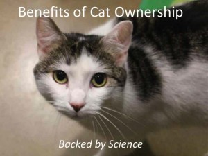 Benefits_of_cat_ownership_backed_by_science