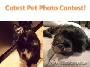 cockeysville_apartments_cutest_pet_photo_contest_hirschfeld_apartment_homes