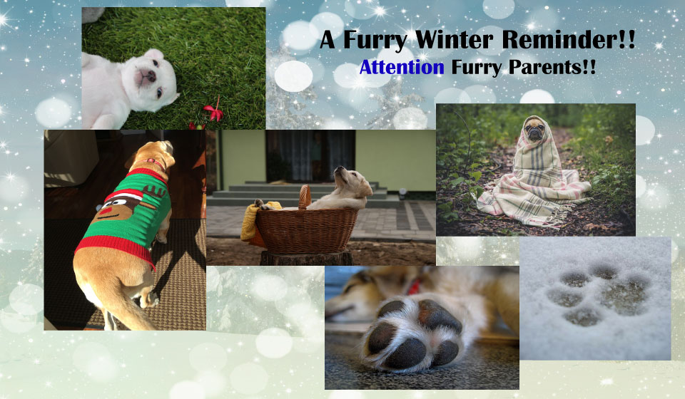 Tips to Keep Your Pet Healthy in the Winter