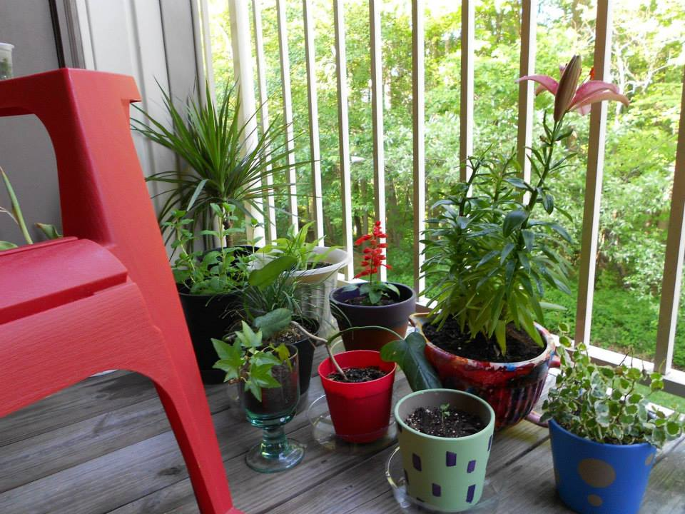 do it yourself potted plants