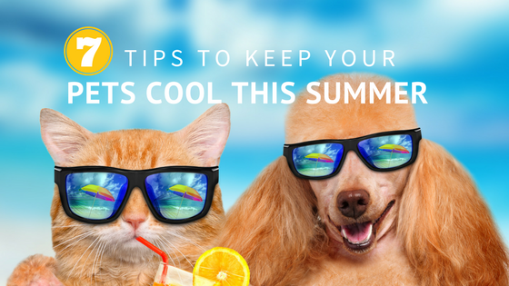 seven tips to keep your pets cool this summer