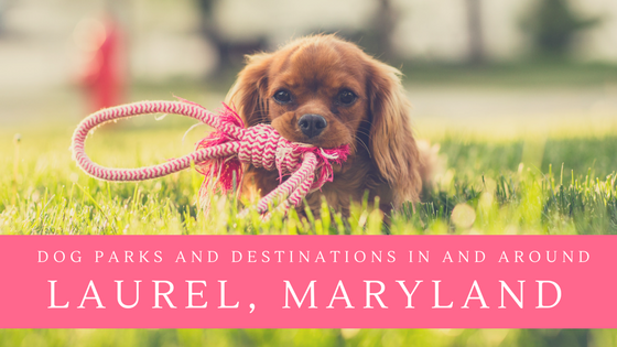 dog parks and destinations in and around Laurel maryland
