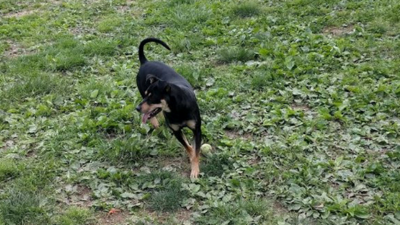 dog panting in the grass leo e wilson community park laurel maryalnd
