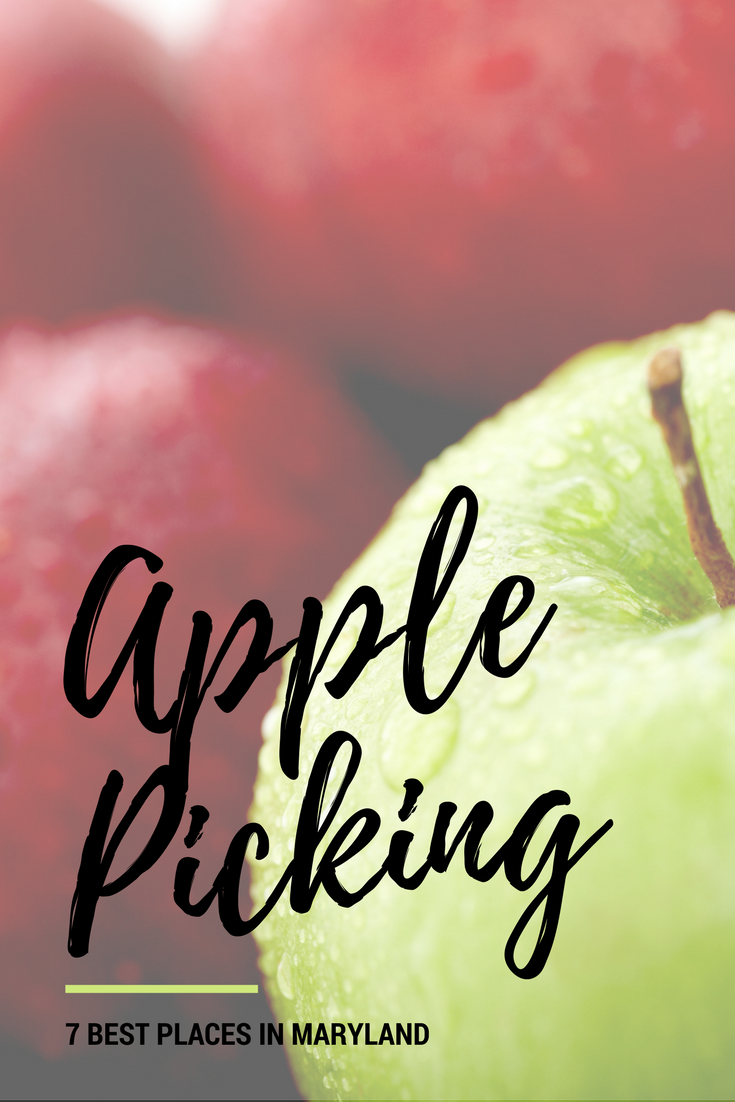 apple picking 7 best places in maryland