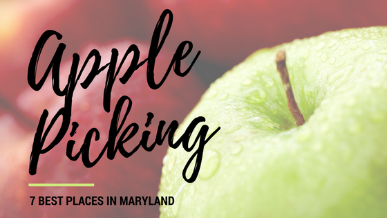 apple picking seven best places in maryland