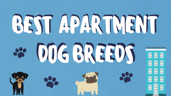 best apartment dog breeds