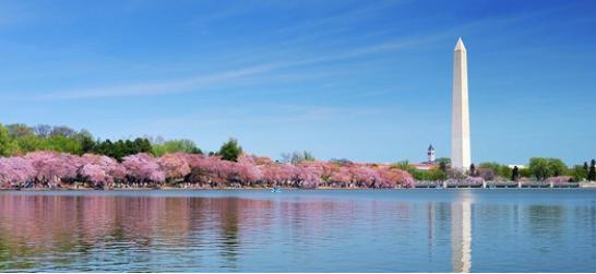 National Cheery Blossom Festival Washington DC