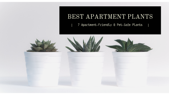 best apartment plants 7 apartment-friendly and pet-safe plants